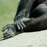 ¿Tienes pie de mono?