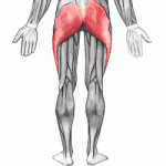 relación entre la lesion del tendón de Aquiles y el glúteo