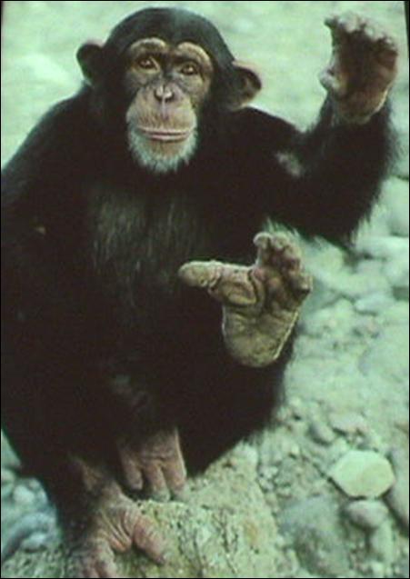 evolucion del pie